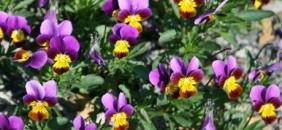 Blumen für den eigenen Garten